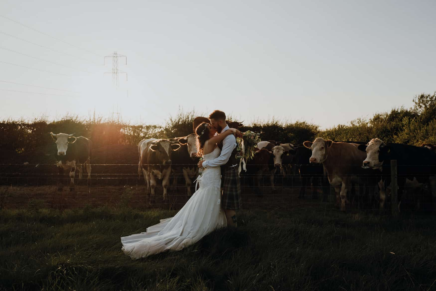 bride and groom portrait in a feild of cows backlit by the sun