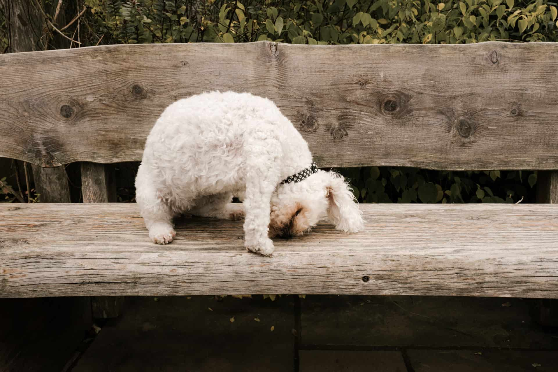 dog on the bench